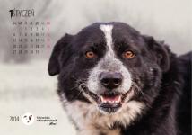 kalendarz ścienny ze zwierzętami