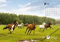 kup kalendarz ścienny ze zwierzętami