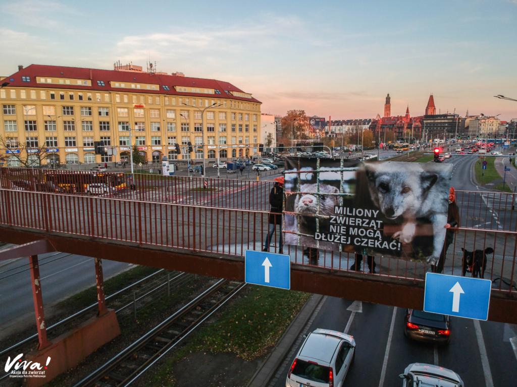 Wrocław, akcja z banerem z okazji Dnia bez Futra. Czas na zakaz zbijania milionów zwierząt na futra