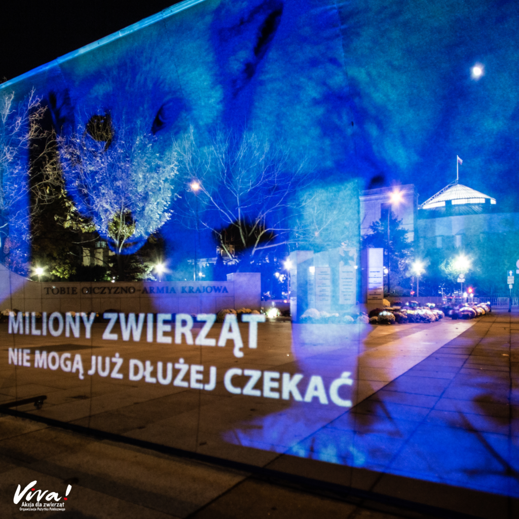 Hologram pod Sejmem, zdjęcie lisa z fermy i apel do posłów i posłanek o szybkie przyjęcie projektu nowelizacji ustawy o ochronie zwierząt.