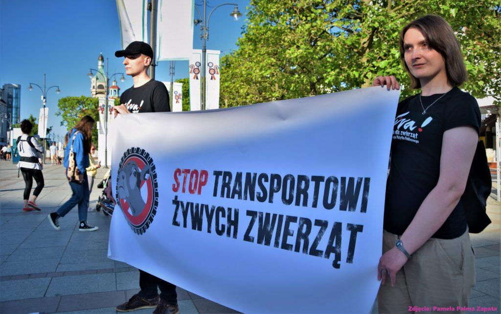 viva trójmiasto ban live transport stop