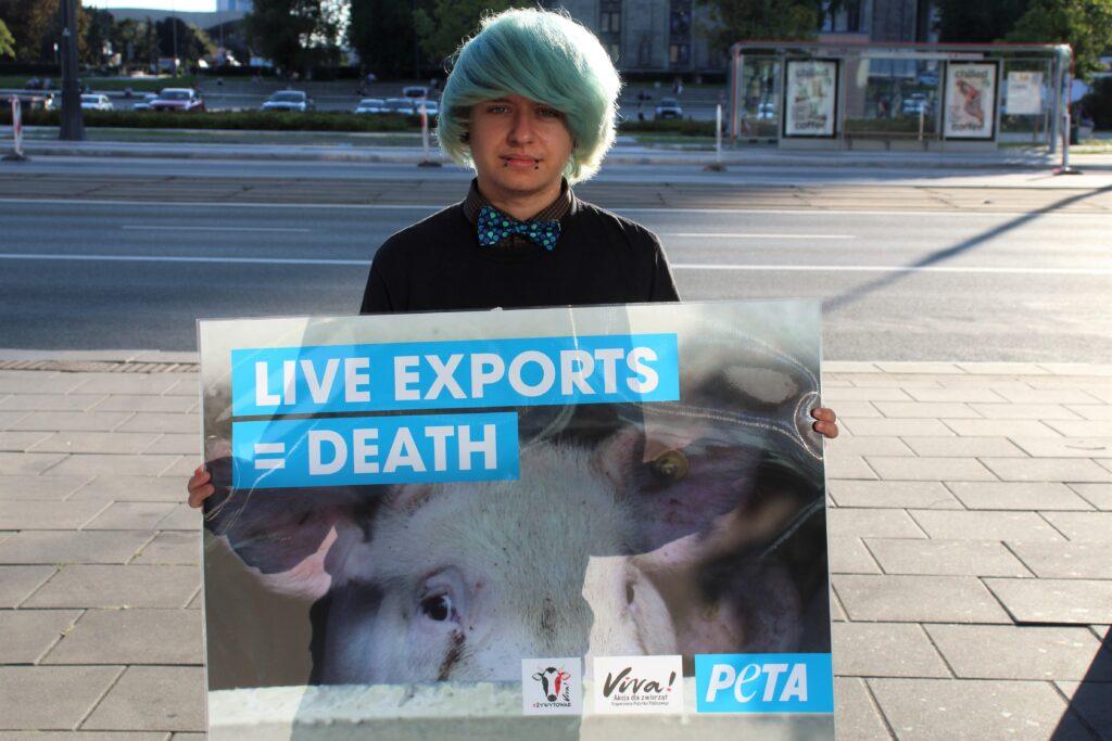stop transportom zwierząt