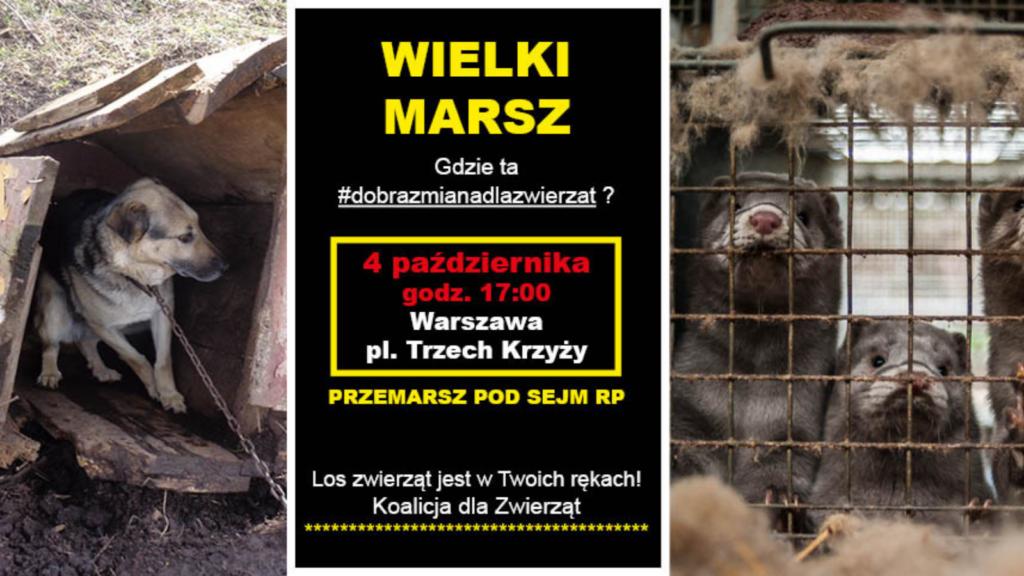demonsracja o zmiany prawne dla zwierząt już 4 października