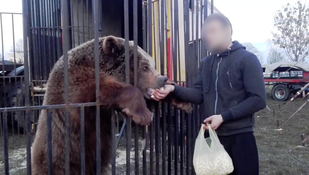 cyrkowcy winni znęcania się nad zwierzętami